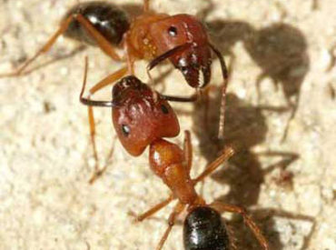 What is Attracting Carpenter Ants to Your Home?