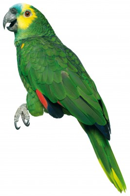 Parrot, humor, business, core values