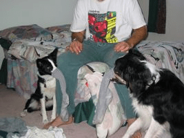 Sock-Dogs-sm