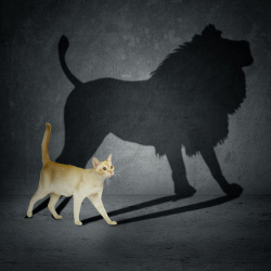 Cat Lion Shadow - Upgrading Your Brand