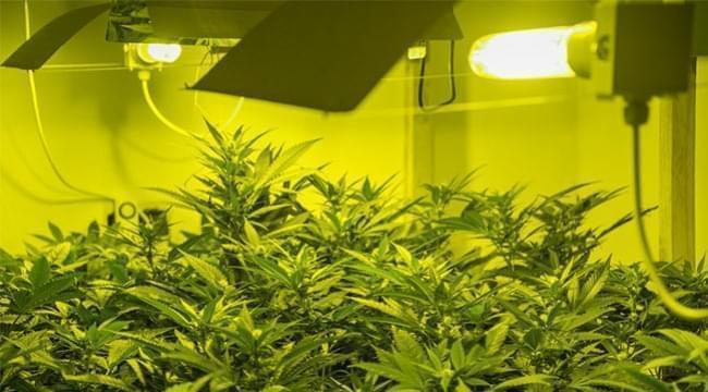 light for autoflowering marijuana