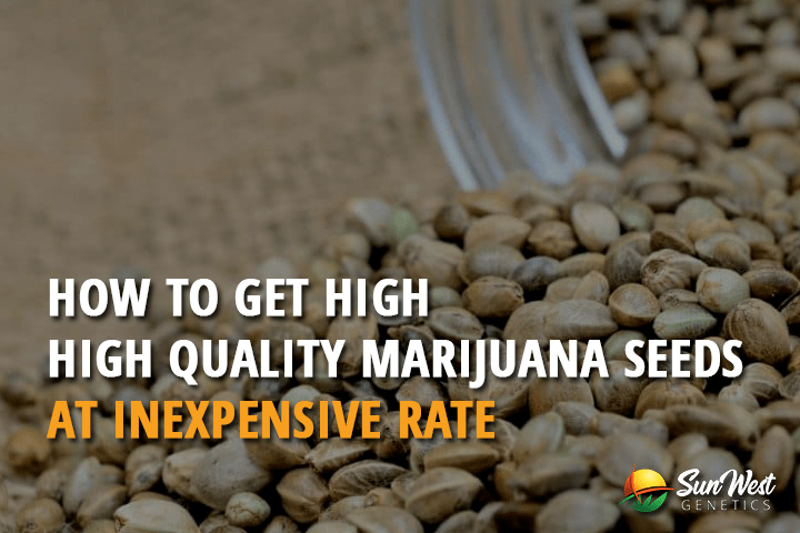 How to Get High-Quality Marijuana Seeds at Inexpensive Rate