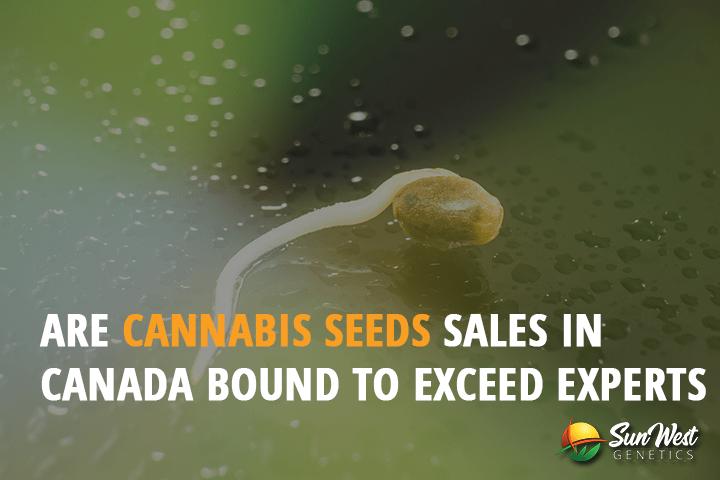 cannabis seeds sales