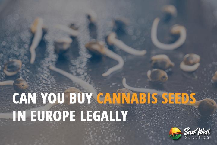 autoflowering cannabis seeds europe