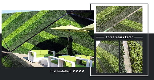 three-years-chanllenge-of-sunwing-artificial-hedges