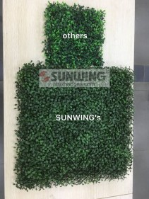 color-performance-of-sunwing-artificial-boxwood