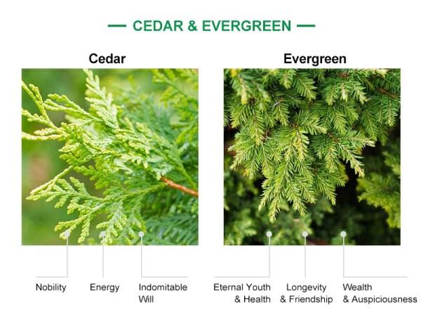 moral of cedar&evergreen leaf