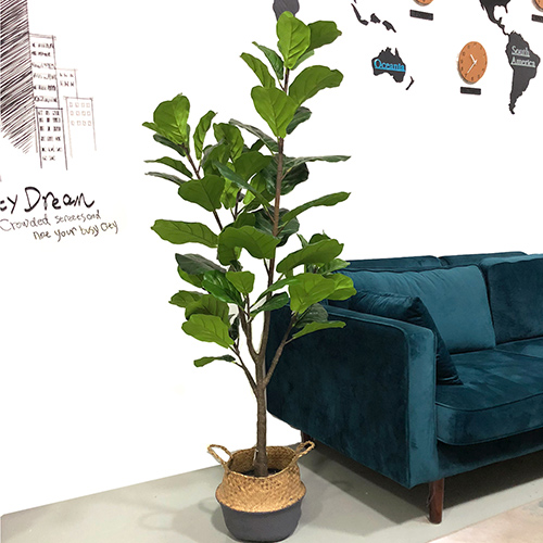 Add Greenery Indoor with Fake Green Banyan Tree