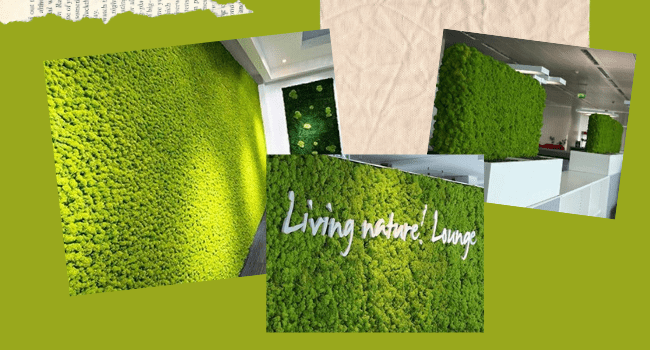 Preserved Moss Wall in Pure Color