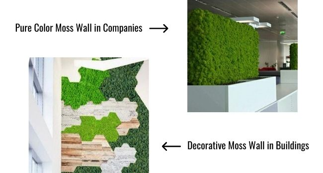 Moss Wall Plants for Workplaces