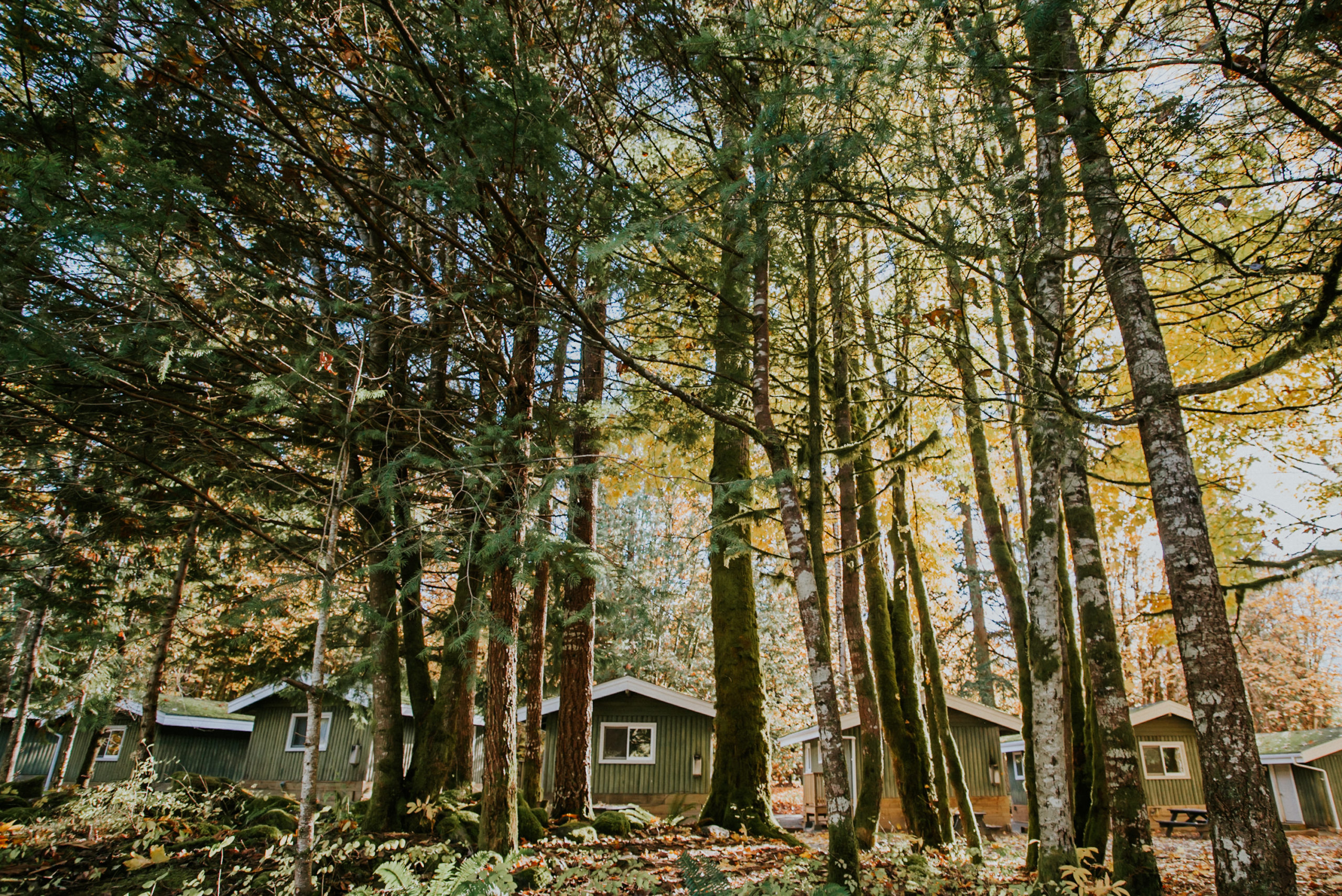 cabins, forest