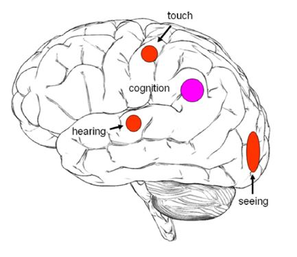 Results of functional imaging of meditation cognition