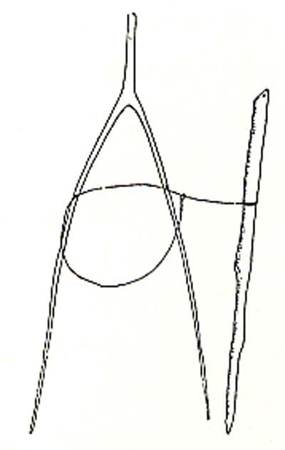 Karesuando ting den 10 december 1887 § 1 mom 3