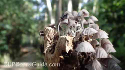 Mushrooms in Jungle