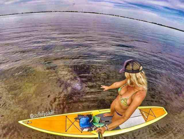 A casual paddler seems to have caught the eye of a curious onlooker. Most probably a Manatee that is looking for attention!