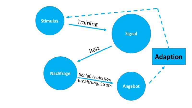 Vier Komponenten für kontinuierlichen Trainingserfolg