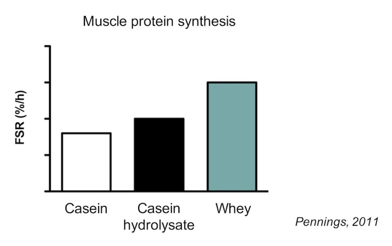 Whey Casein MPS Pennings 2011