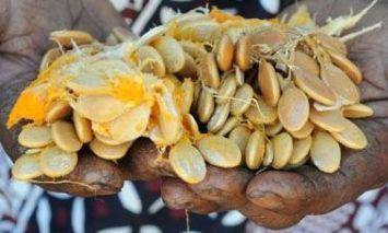 Zucca di Lare (Kenya)