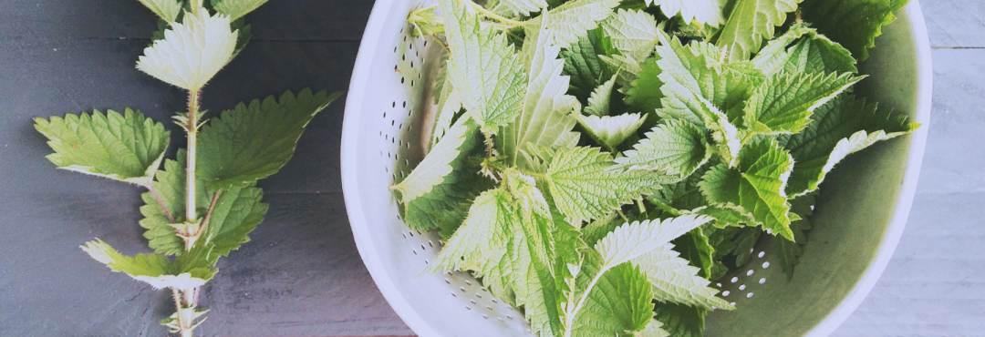 L'ortie, ce trésor de petite herbe + 3 recettes végétales et toutes crues