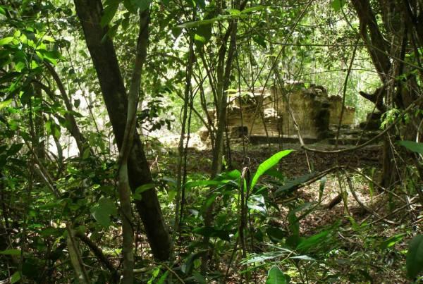El Pilar (El Pilar Archaeological Reserve for Maya Flora & Fauna)