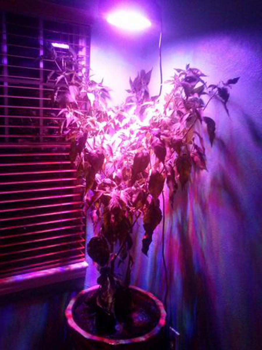 Full Spectrum UFO LED Grow Light  135W Equivalent  Round