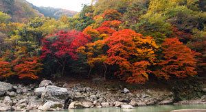 Arashiyama_autumn_color