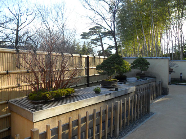 showa_kinen_bonsai_3