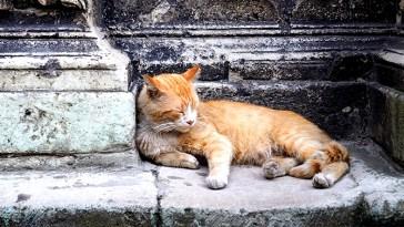 Adopter un chat d'un abri 16