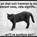 Faits amusants sur les chats noirs que vous ne saviez jamais 7