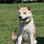 Information de race de chien 15