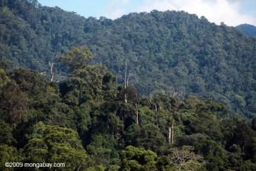 Quelle est la différence entre une forêt et une forêt tropicale? 20