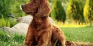 Un chien pour la famille 6