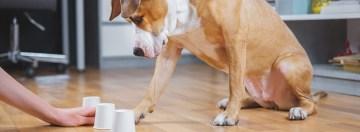 lembauche dun auditeur de chien est elle le meilleur conseil pour dresser un chien