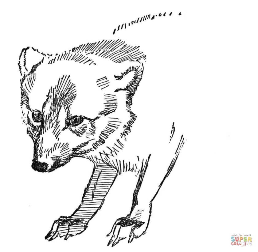 face of arctic fox coloring page  free printable coloring