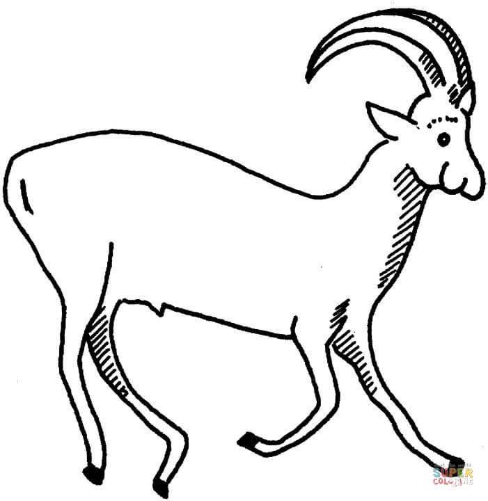 Pronghorn Pages Coloring Pages