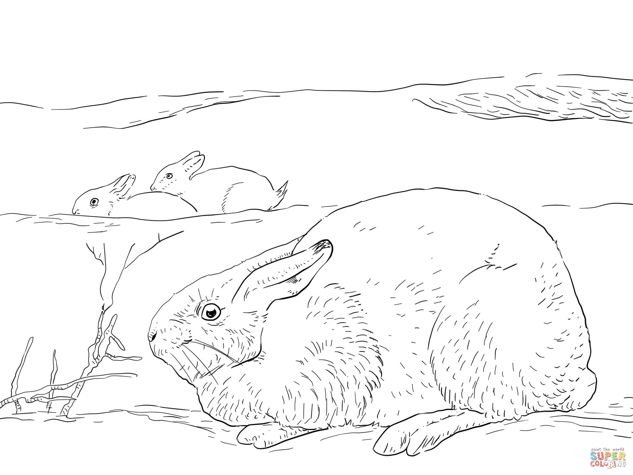 Arctic Hares Coloring Page