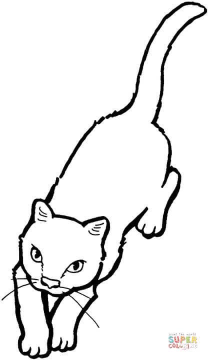 Kissa värityskuva