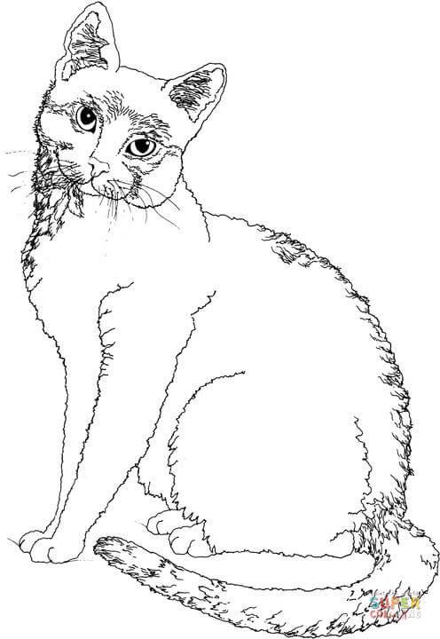 Ausmalbild Katze schaut sich um Ausmalbilder kostenlos