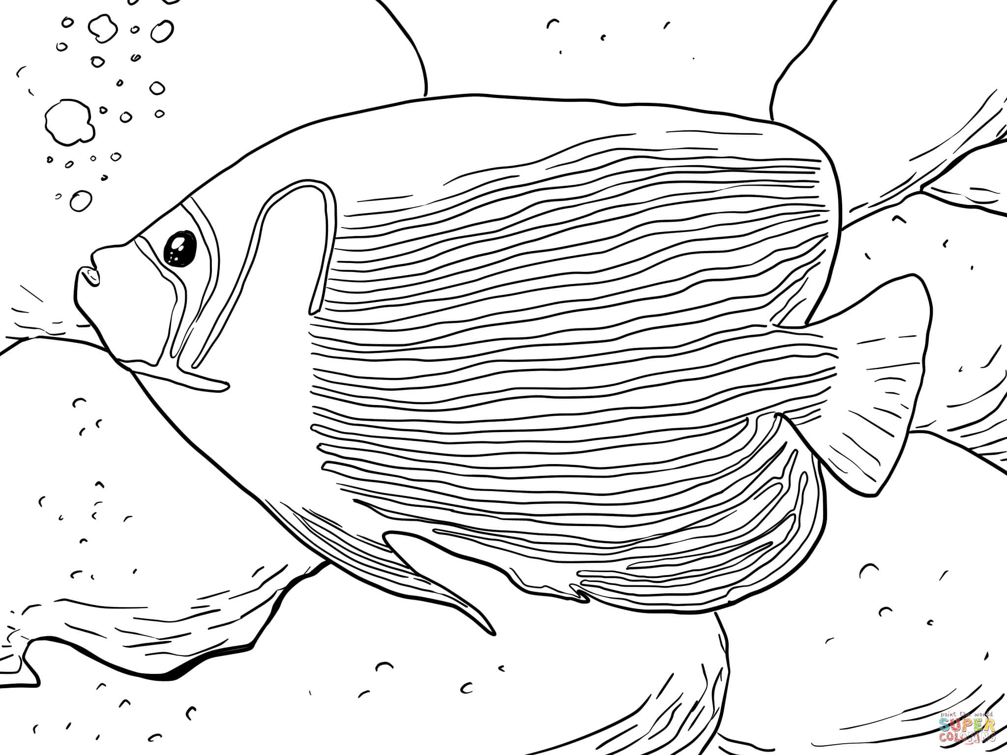 Emperor Angelfish Coloring Page