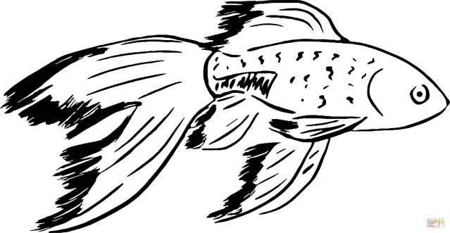 Goldfish coloring page  Free Printable Coloring Pages