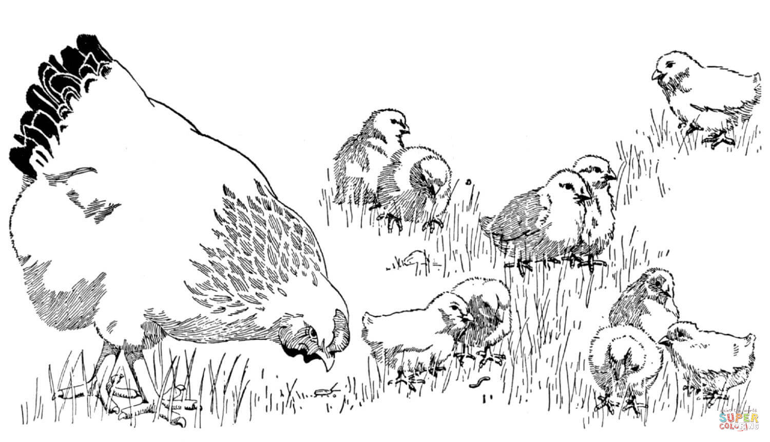 Mother Hen And Baby Chicks Coloring Page