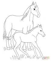 Pferde Mit Fohlen Ausmalbilder Zum Ausdrucken Kostenlos