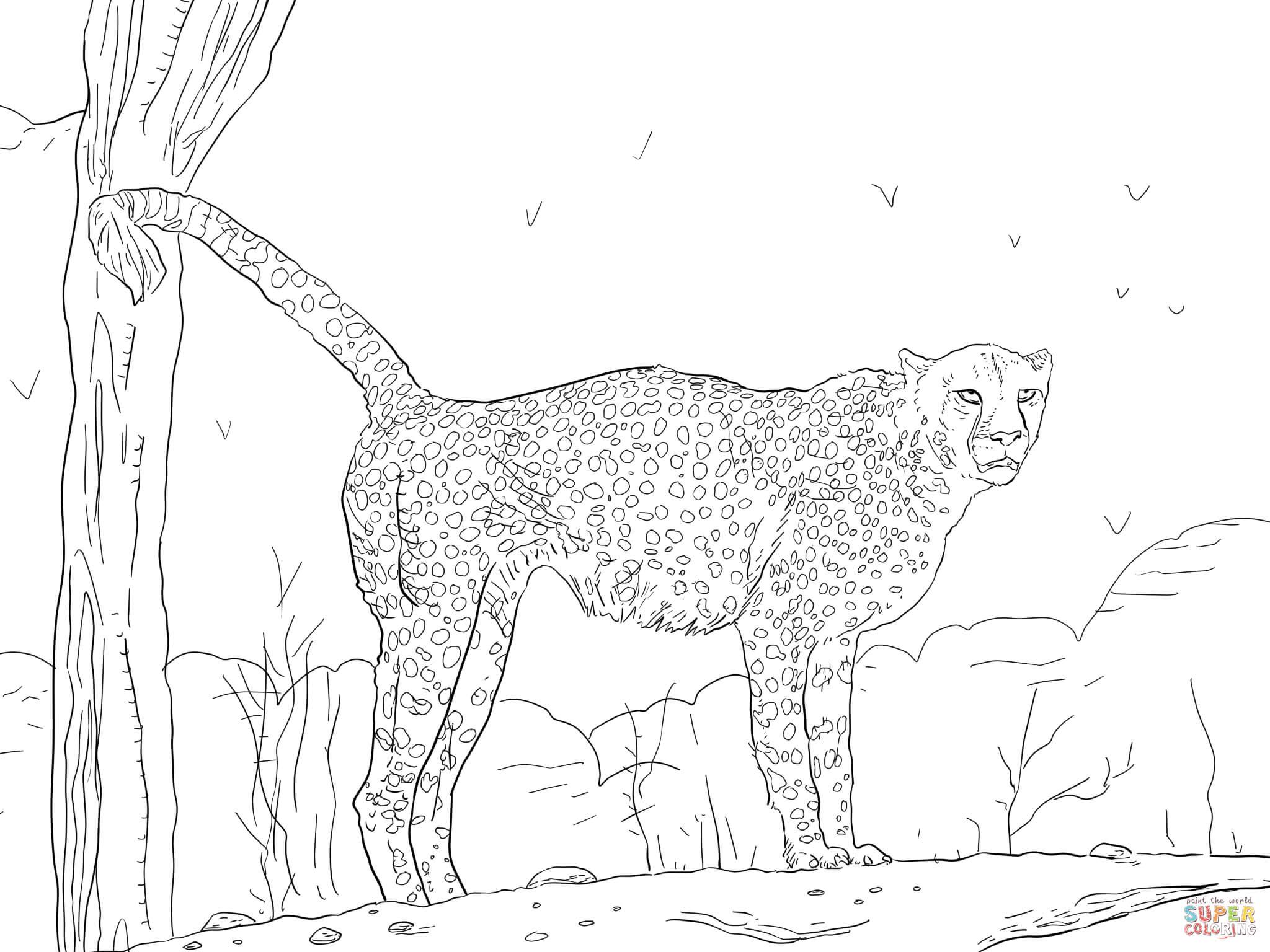 Namibian Cheetah Coloring Page