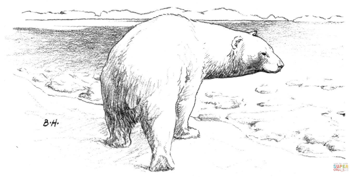Polar Tundra Coloring Pages Coloring Coloring Pages