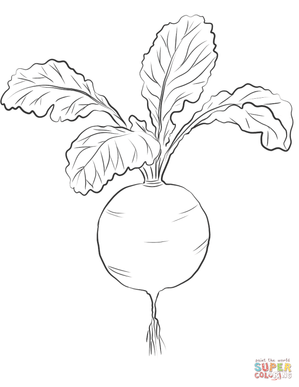 red radish coloring page free