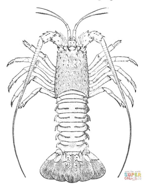 Rock Lobster coloring page Free Printable Coloring Pages
