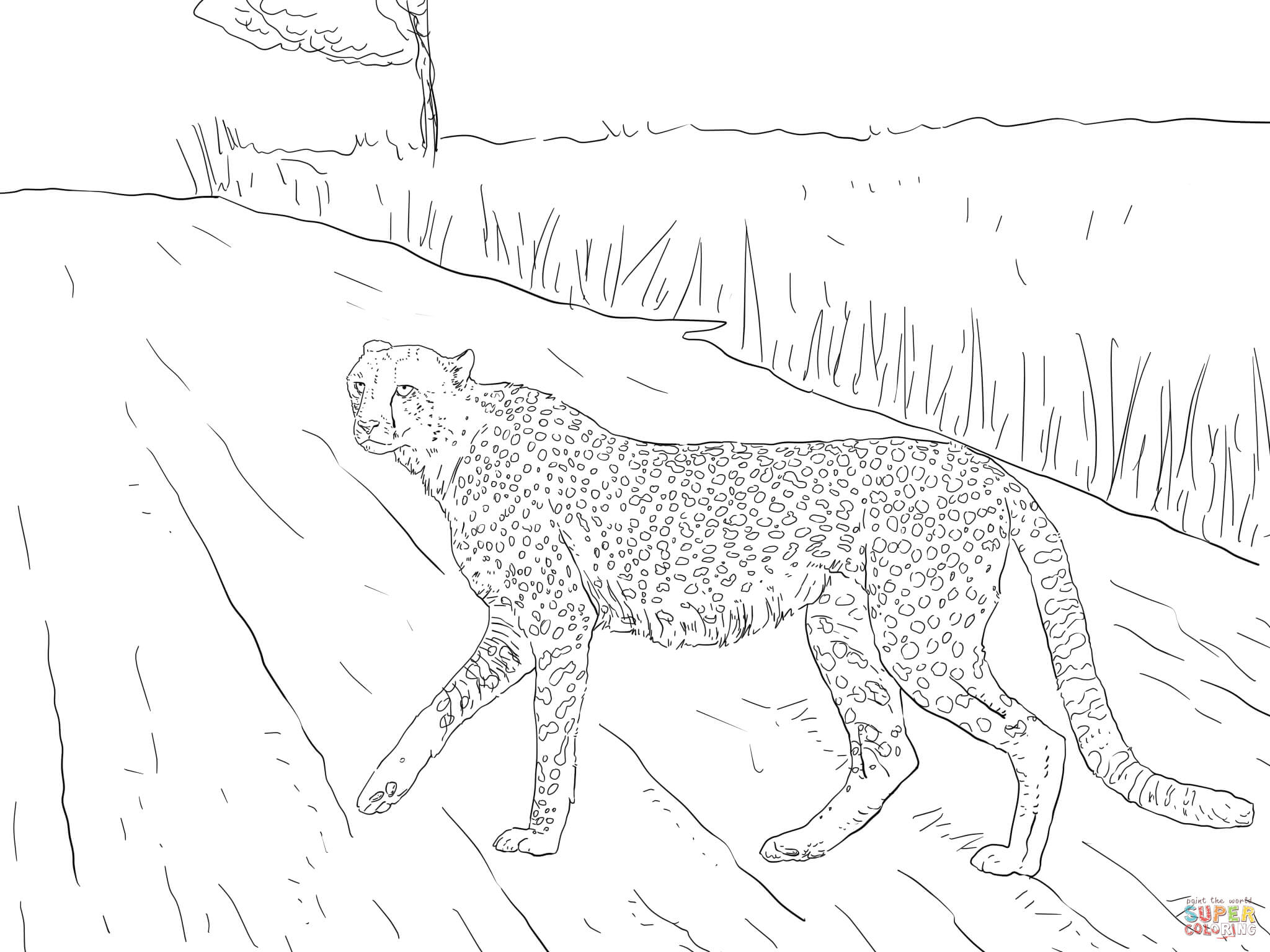 Ausmalbild: Südafrikanischer Gepard vom Kruger