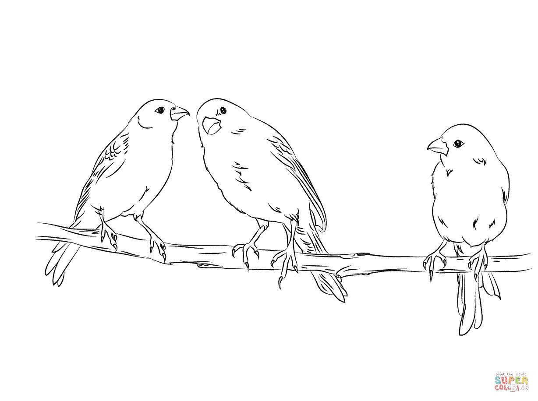 Dibujo De Tres Canarios Amarillos Para Colorear