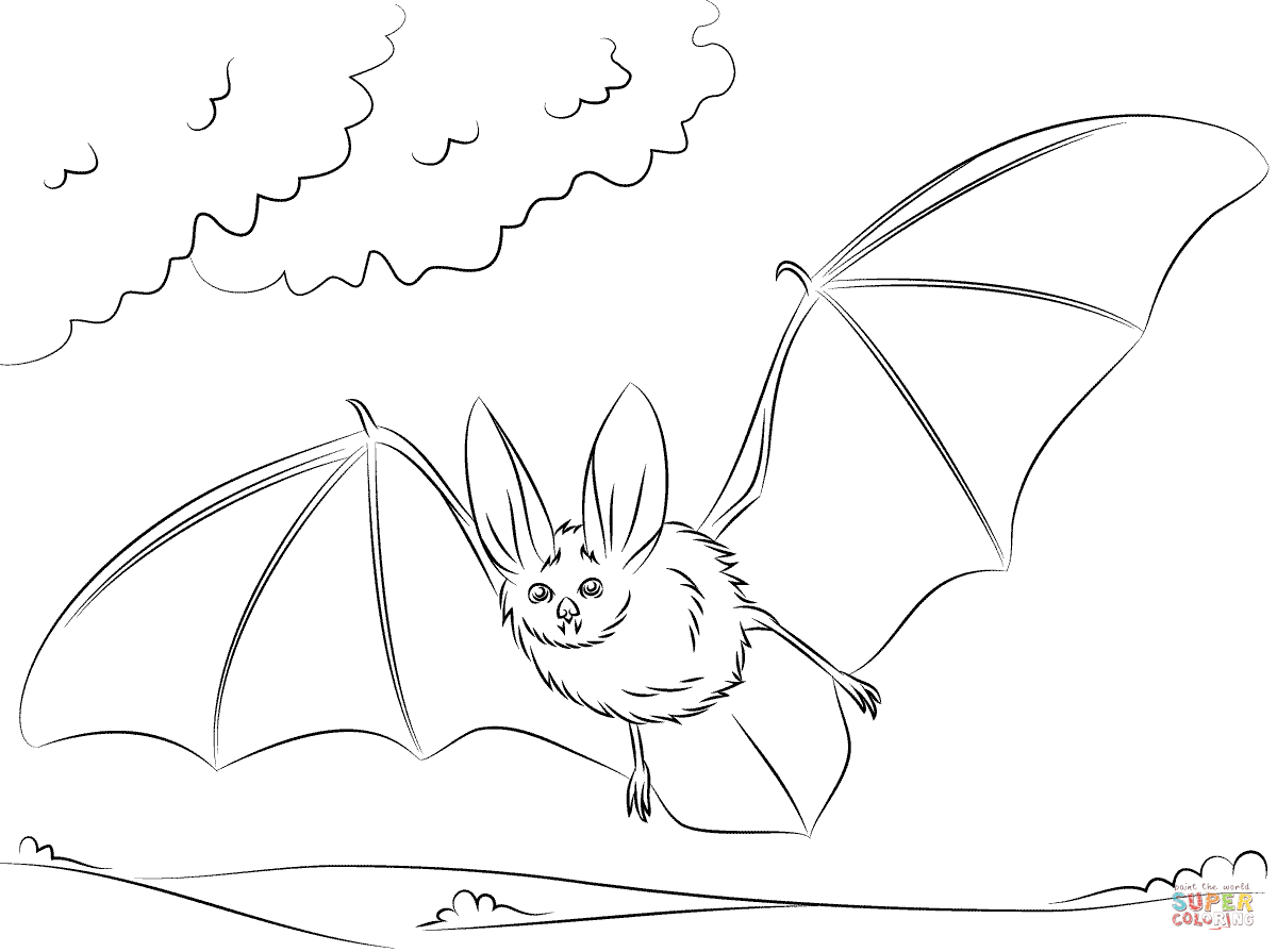 Townsend S Big Eared Bat Coloring Page