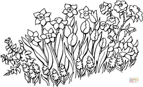 garden coloring page # 20